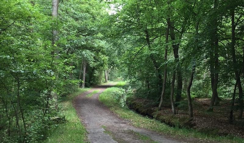 Galeria zdjęć Sosnowe lasy w